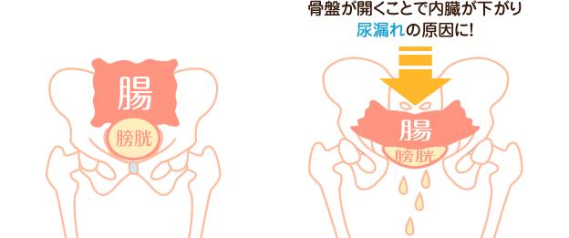 骨盤が開くことで内臓が下がり尿漏れの原因に!